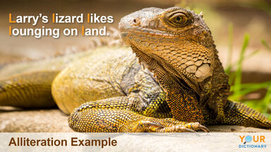 example of alliteration with lizard sentence