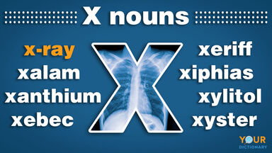 nouns that start with x