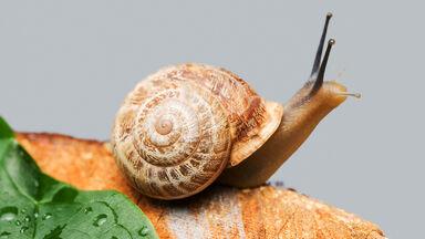 Example of Decomposer Heterotroph snail