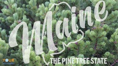 maine the pine tree state