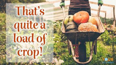 fall pun load of crop