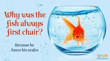 goldfish in aquarium pun