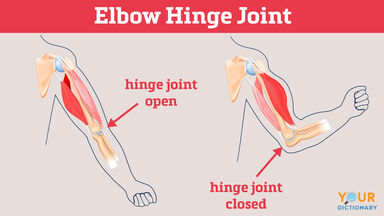 elbow hinge joint open closed