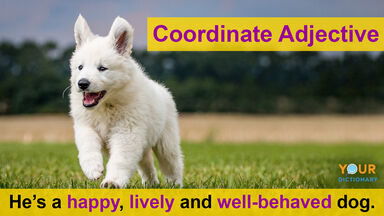 coordinate adjective happy, lively and well-behaved dog