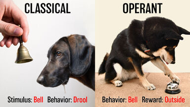 difference classical and operant behavior dogs