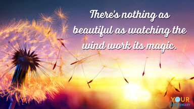 Dandelion as Dynamic Wind Quotes example