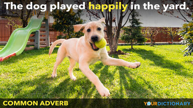common adverb dog played happily