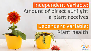 Flowers Independent and Dependent Variable Examples