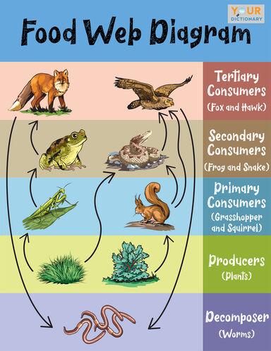 food web diagram example