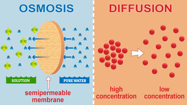 difference between osmosis and diffusion