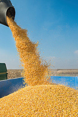Pouring grain into a truck as supply and demand examples