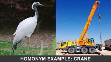 homonym example crane