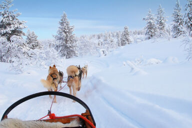 Sled dog on an icy trail