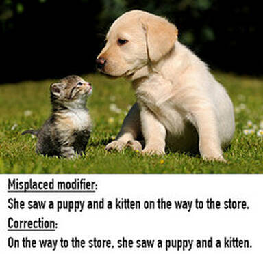 A puppy and kitten in the yard