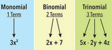 chart showing monomial, binomial and trinomial terms