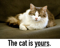 The cat is yours.