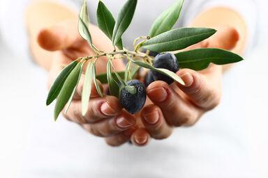 hands extending an olive branch