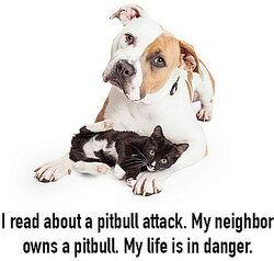 pitbull with kitten