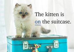 kitten on suitcase