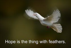 White dove flying as a metaphor