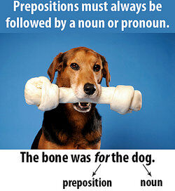 dog with a bone in its mouth