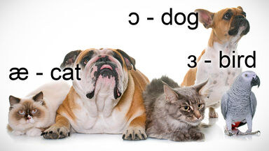 IPA Vowel Sounds for Cat, Dog and Bird