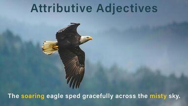soaring eagle attributive adjectives