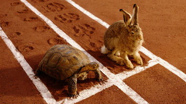 Opposites fast and slow with the tortoise and hare