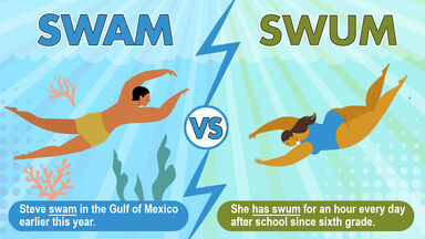 swam vs swum sentence usage example
