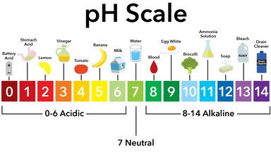 pH Scale with examples