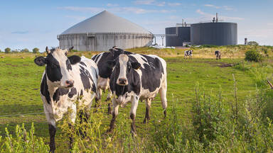 Renewable energy example Biogas plant with cows