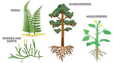 four plant types