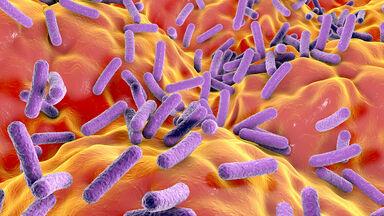 Illustration of Eubacteria bacteria