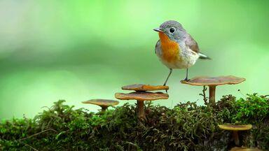 bird on mushrooms