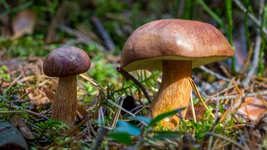mushroom metabolism energy from dead leaves