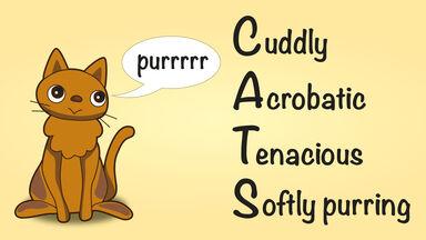 CATS Acrostic Poem