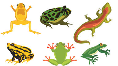examples of amphibians