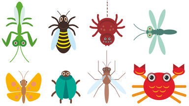 examples of invertebrates