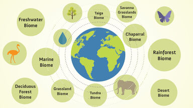 Biome examples around the world