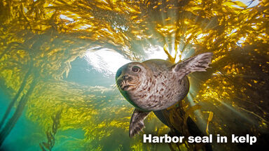 Marine Biome animal harbor seal