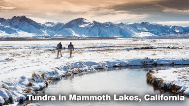 Tundra Biome Mammoth Lakes, California