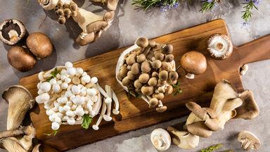 various fungi mushrooms
