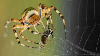 spider capturing prey in web