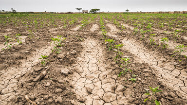 example of a field in drought