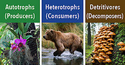 Examples of Biotic Factors