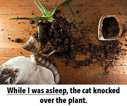Cat knocked over the plant as examples of dependent clauses