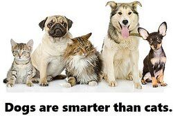 Two cats and three dogs as examples of generalization