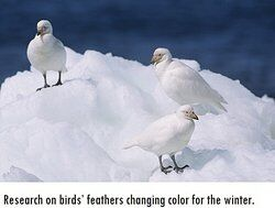 Three birds standing in snow as examples of hypothesis testing