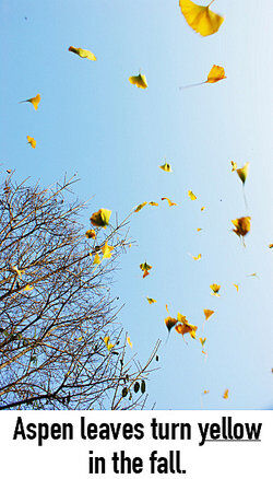 Yellow leaves falling from trees as examples of predicate adjectives