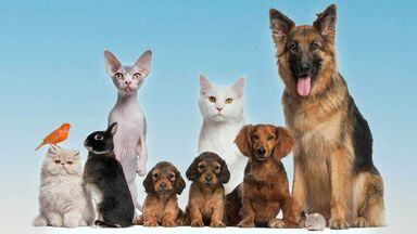 animal names for group of pets